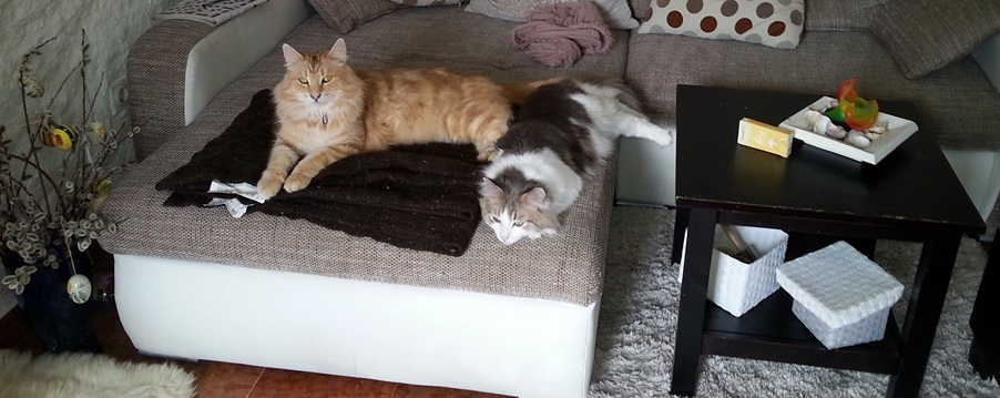 Bezi und Gigolo